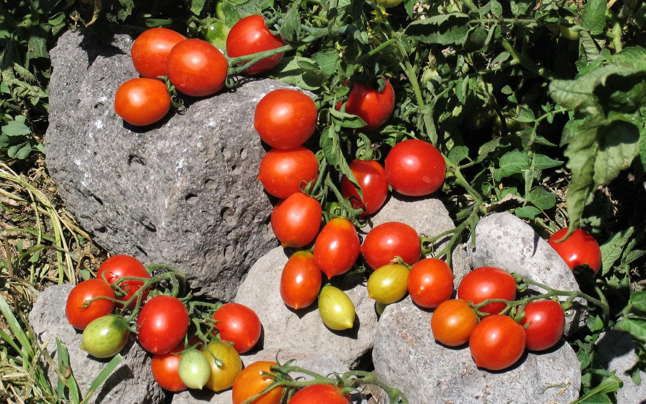 Agri-cultura, promozione della biodiversità e del territorio nelle aree protette