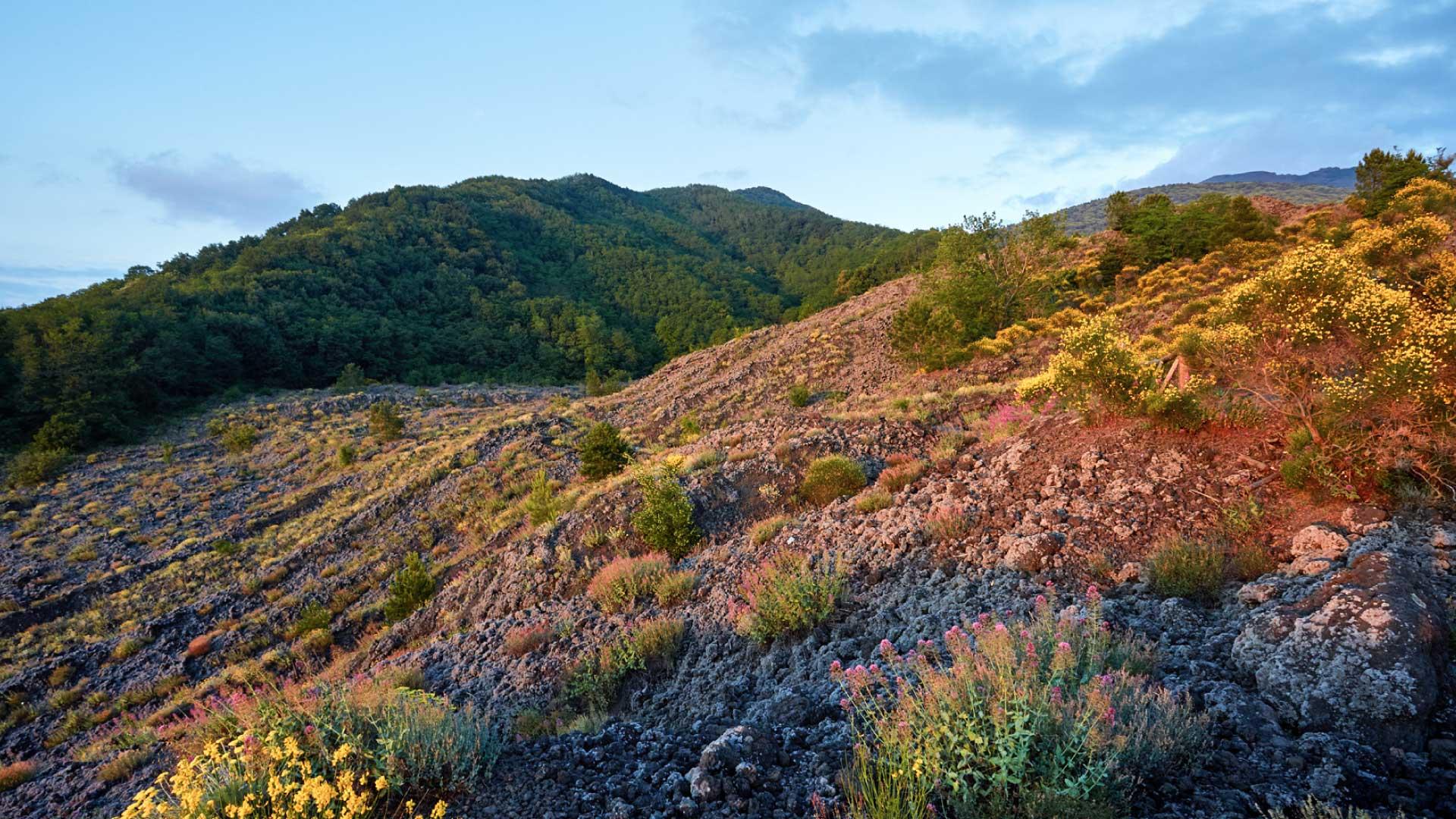 Area Protetta | Parco Nazionale del Vesuvio