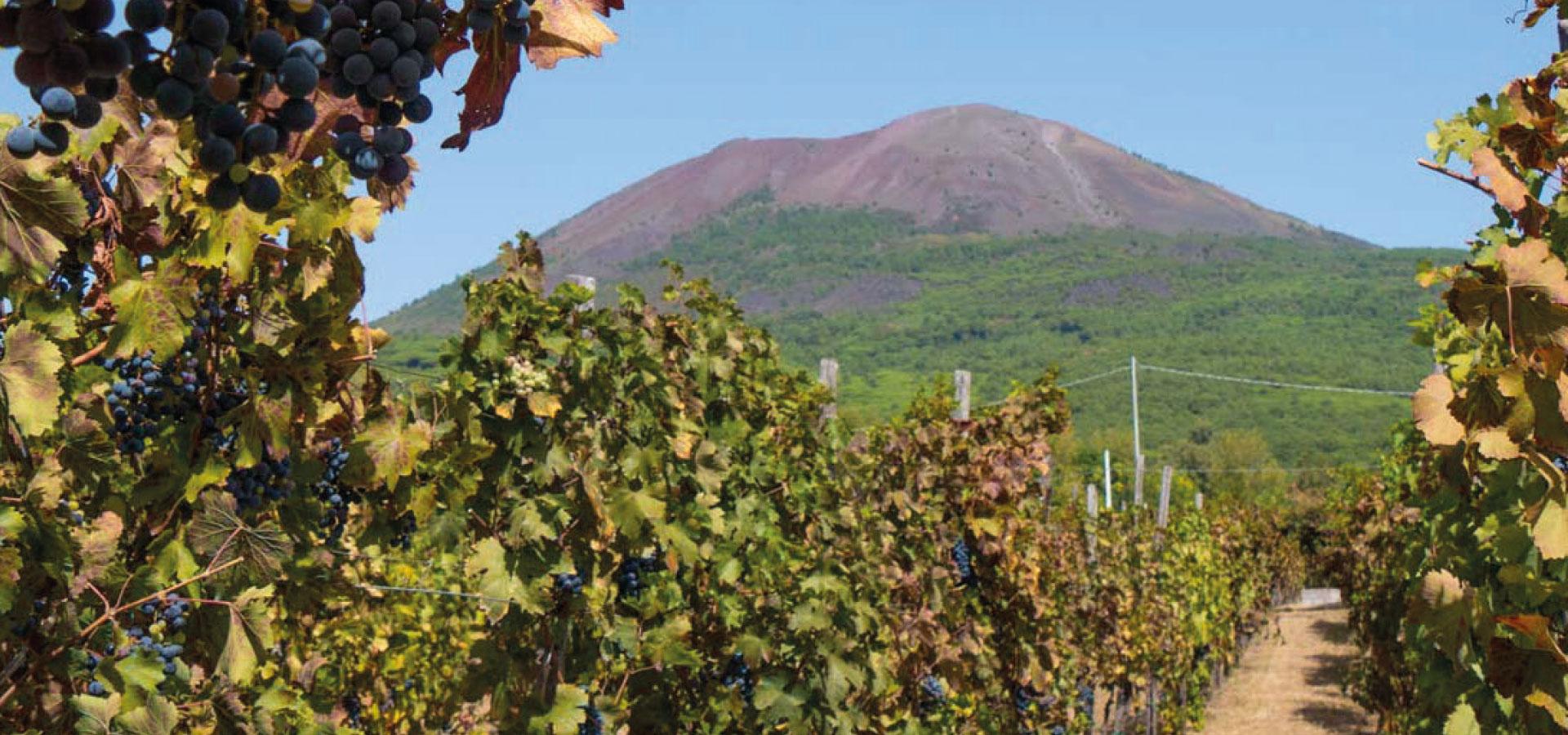 Guida ai Bandi del GAL | Ente Parco Nazionale del Vesuvio