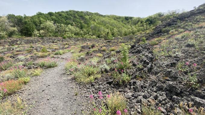 Sentiero 9 il Fiume di Lava | Parco Nazionale del Vesuvio