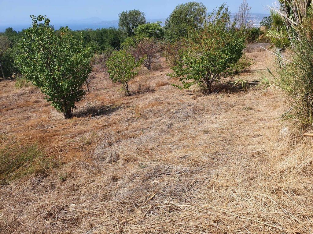 Giardino Vesuviano